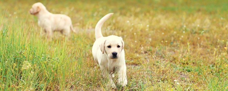 puppy-socialization