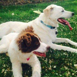 spring dogss