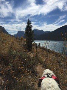 hikingdog
